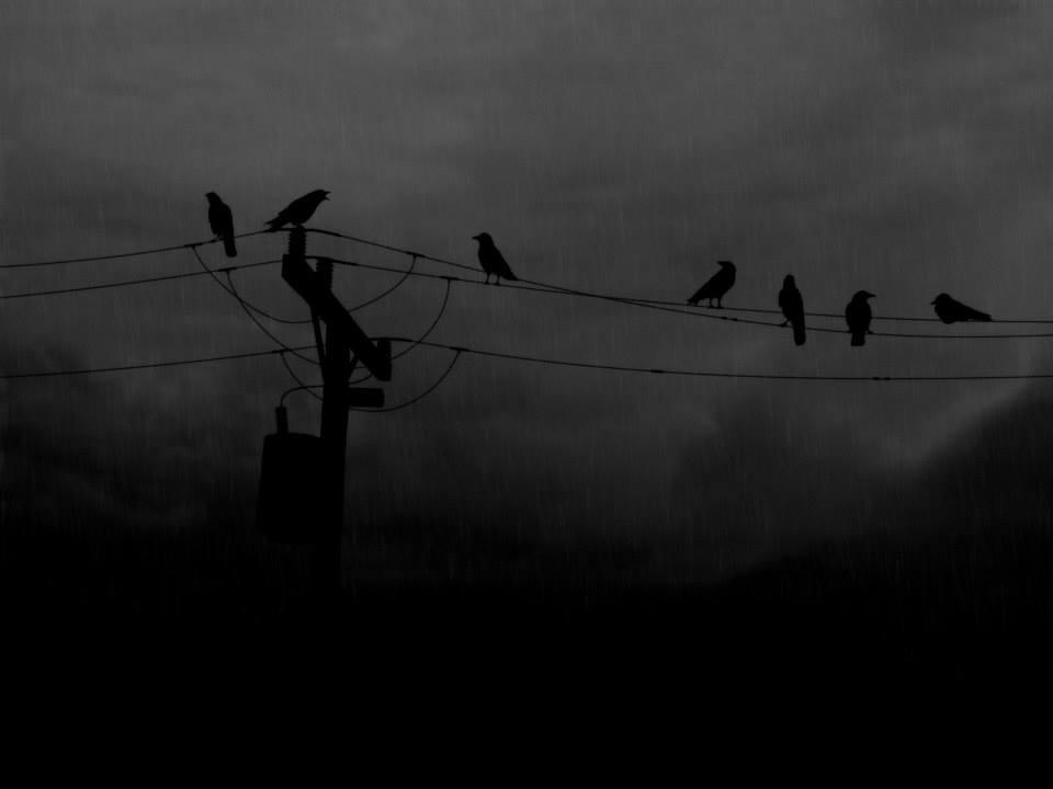 Foto de Alexia Gowland